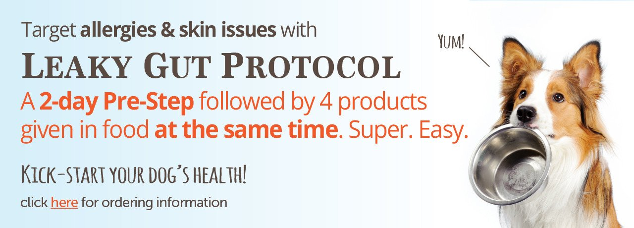 adored beast apothecary - leaky gut syndrome protocol - now available!